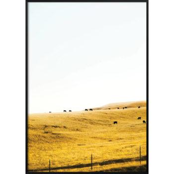 łąka zdjęcie