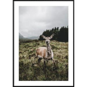 Plakat Dzika Szkocja