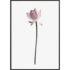 Plakat Kwiat lotosu
