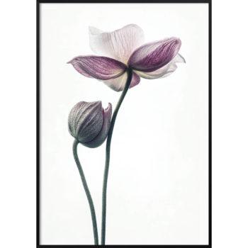 lotos jak kwitnie