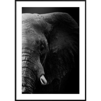 zdjęcia dzikich zwierząt
