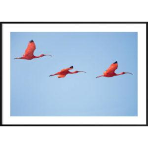 Plakat Flamingi na niebie
