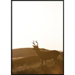 Plakat Jeleń zachód słońca
