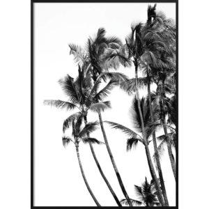 Plakat Palmy czarno-białe