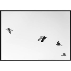 Plakat Ptaki na niebie