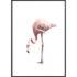 Plakat Różowy Flaming NO.1