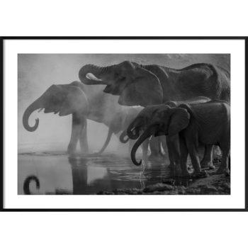 plakat z dzikimi zwierzętami czarno-biały