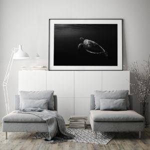 Plakat Żółw morski na komodzie