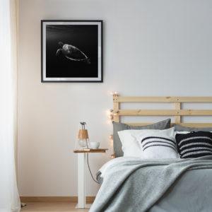 Plakat Żółw morski w sypialni