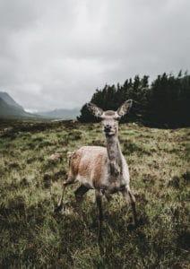 dzika-szkocja