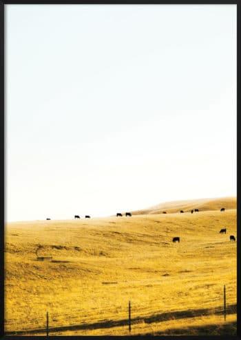 plakat łąka
