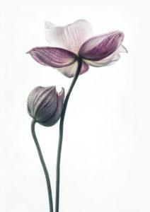 lotos bez ramy