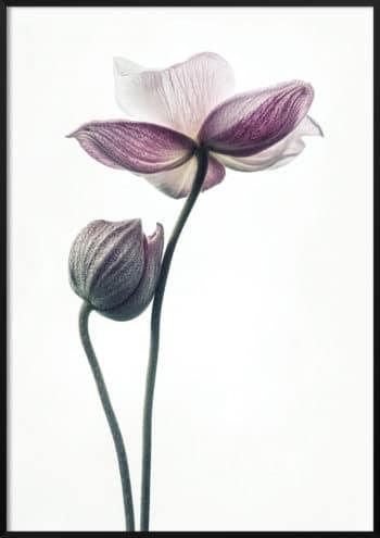 plakat lotos