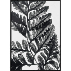 Plakat Liść czarno-biały