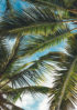 tropikalne dodatki