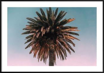 plakat palma zachód słońca