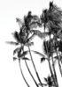 palmy czarno-biale