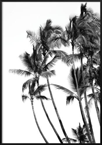plakat palmy czarno-biały