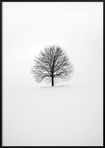 Plakat Samotne drzewo B&W