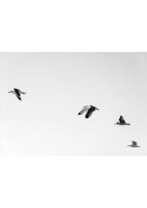 ptaki na niebie