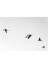 czarno biały plakat z ptakami