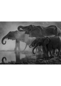 slonie przy wodopoju