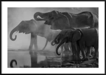 plakat słonie przy wodopoju