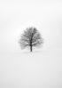 czarno-białe drzewo
