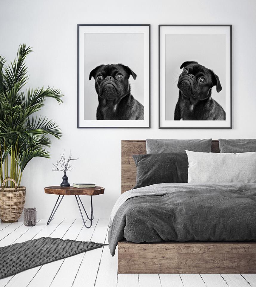 plakaty na ścianę portret psa głupia mina plakat na ścianę sklep