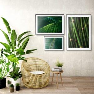 Plakat Tropikalne liście, Liść fikusa zbliżenie, Bambus