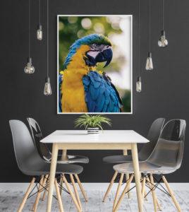Plakat Papuga