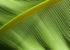 modne zielone dodatki