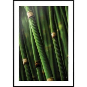pędy bambusa