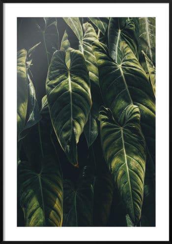 plakat ciepłe słońce na liściach