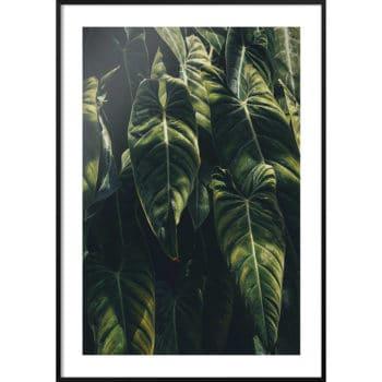 motywy roślinne do domu