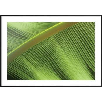 zielone dodatki do domu
