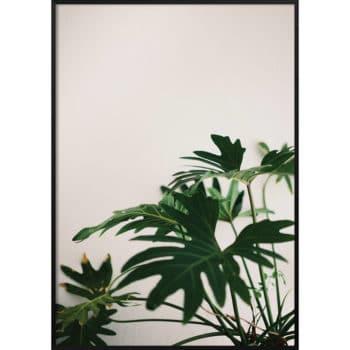 motyw liści