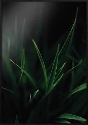 plakat soczysta trawa