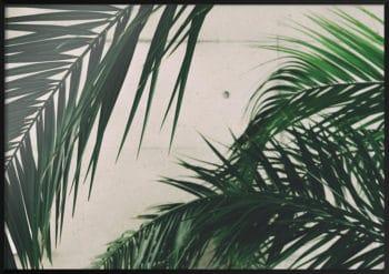 plakat zielone liście palmy