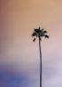 motyw palmy dodatki