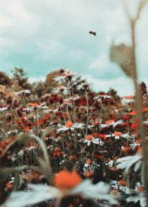 Łąka kwiatów