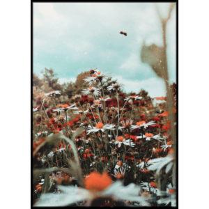 Plakat Łąka kwiatów