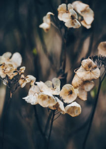 Kwiaty późnego lata