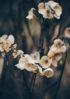 suszone kwiaty