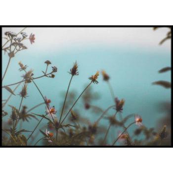 rustykalne zdjęcia roślin