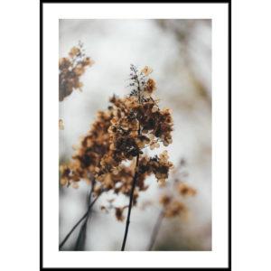 Plakat Sucha hortensja
