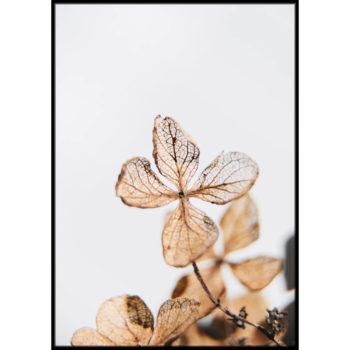 kwiaty z bliska