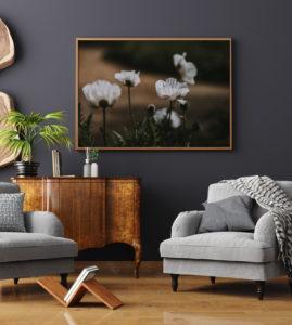 Plakat Białe maki w salonie