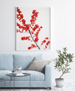 Plakat Czerwone jagody w salonie
